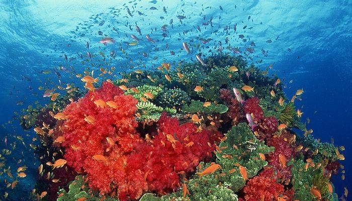 الشعاب المرجانية Coral reefs